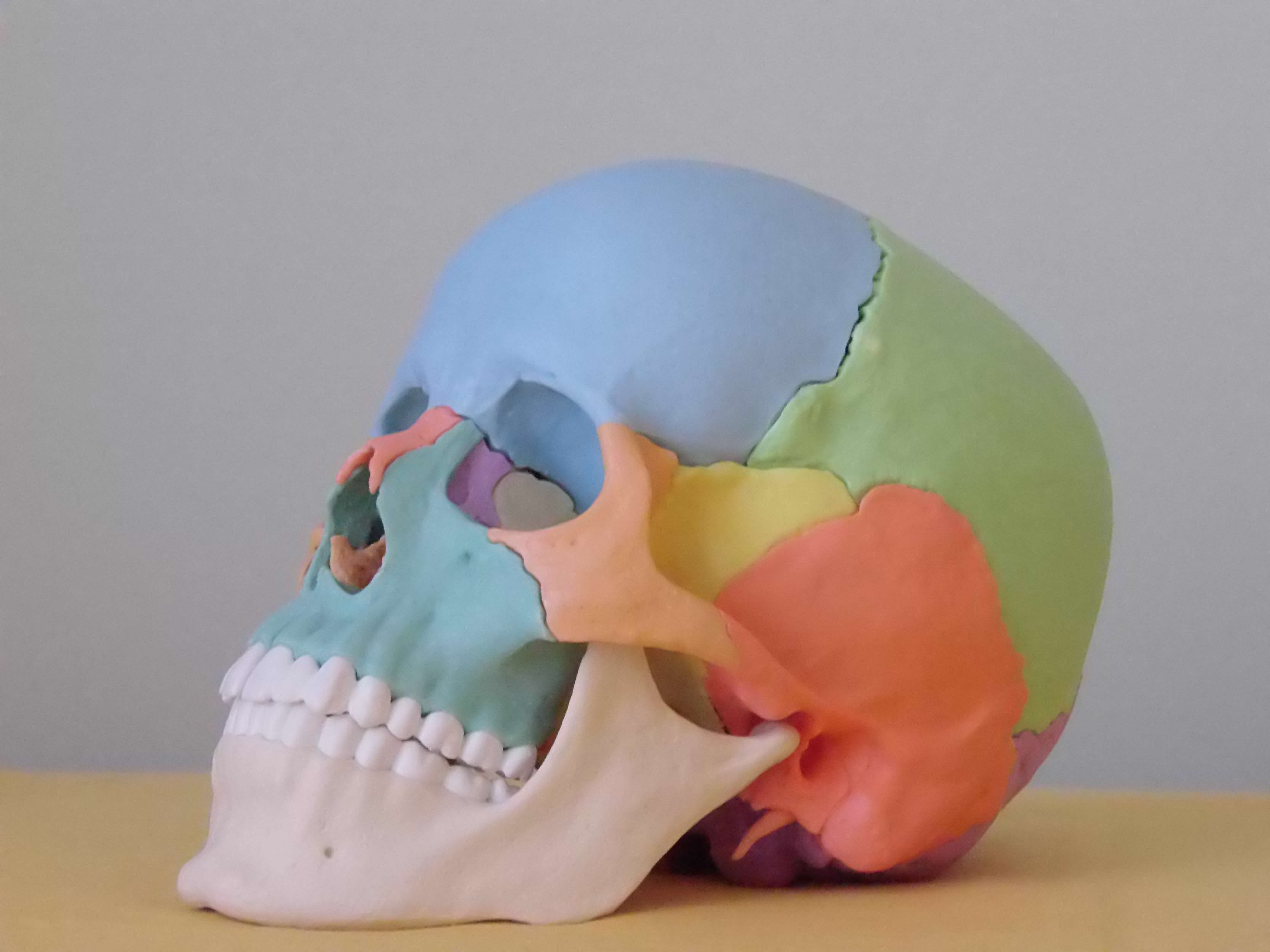 Craniosacrale Balance Ausbildung